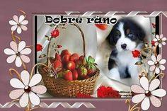 Good Night, Good Morning, Pets, Nighty Night, Buen Dia, Bonjour, Good Night Wishes, Good Morning Wishes, Animals And Pets