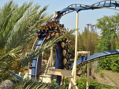 Montu - Busch Gardens Tampa - A list of roller coasters that I've been on. Tampa Bay Fl, Busch Gardens Tampa Bay, Bush Garden, St Pete Beach, Roller Coasters, Places To Visit, England, Spring Break, Summer