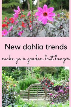 Make your garden last longer with dahlias