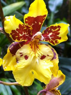 Beautiful #orchids    http://www.roanokemyhomesweethome.com
