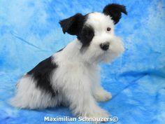 Mini schnauzer puppies for sale in oregon