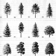 Learn the Basics of Tree Structure: Parts of a Tree, Use Shape or Silhouette to Identify a Tree