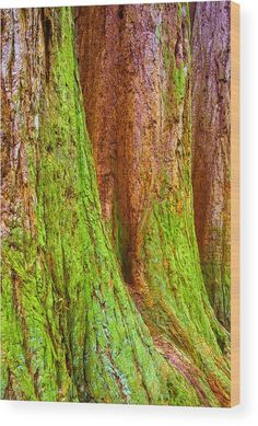 """Sequoia trees covered with moss Wood Print by Matthias Hauser. Nature abstract with beautiful brown and green tones. The image gets printed directly onto a sheet of 3/4"""" thick maple wood. Wood prints are extremely durable and add a rustic feel to any image. Click through and enjoy the texture and depth of this artwork in your home."""