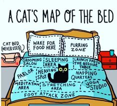 Funny cat map of the bed for cat lovers and owners. Amazing detail of how cats perceive us as they own pet and think they own us. Cute Funny Animals, Funny Animal Pictures, Funny Cute, Funny Looking Animals, Cute Kittens, Cats And Kittens, Funny Kitties, Big Cats, Cats Meowing