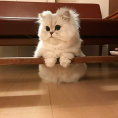 😍😍😍❤️❤️❤️❤️❤️ rate this cat from 1 to white fluffy cat from this post 😍😍 i give it more than infinity 😍😍 this photo was sent to me by # Cute Kittens, Cute Baby Cats, Cute Funny Animals, Cute Baby Animals, Pretty Cats, Beautiful Cats, Photo Chat, Cat Aesthetic, Tier Fotos