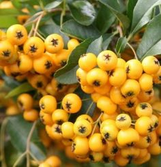 Article: January gardening tips for trees, shrubs and climbers Evergreen Shrubs, Trees And Shrubs, Leaf Flowers, White Flowers, Variegated Plants, Garden Studio, Foliage Plants, Growing Plants, Gardening Tips