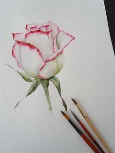 … Aquarell, C… Watercolor. … watercolor, Check more at - Pink Painting, Painting & Drawing, Watercolor Paintings, Rose Paintings, Painting Flowers, Drawing Flowers, Flower Drawings, Watercolor Video, Watercolor Rose