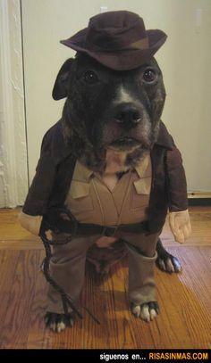 Disfraces perrunos: Indiana Jones.