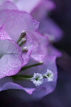Bougainvillea, How beautiful! TG by comolebi* on Flickr..