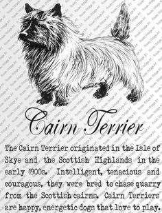 CAIRN TERRIER DOWNLOAD Instant Digital Vintage Art with Description Printable Frame Cards Fabric Transfer Iron On by RosiesVintageArtShop on Etsy