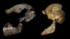 Resten nieuwe mensachtige soort ontdekt in Zuid-Afrika | NU - Het laatste nieuws het eerst op NU.nl