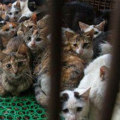Mode-Skandal Katzenfell an Mützen von Tom Tailor und Müller