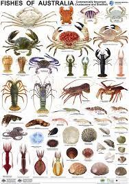 Resultado de imagem para zoological