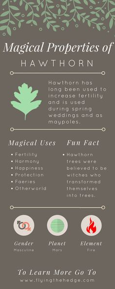 Magical Properties of Hawthorn