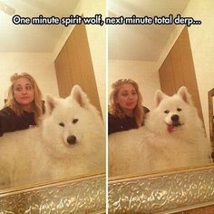 Grandiose in one frame, goofy in the next. That's a Samoyed (if I'm right, correct me if I'm not) for ya! (via izismile)