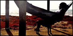 Forestal ,mon chien, mon hamac...Plage sainte Claire Guadeloupe, by Pawel Reklewski