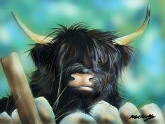 Helen Clark Art Scottish Highland Cow, Highland Cattle, Crazy Cat Lady, Crazy Cats, Farm Animals, Cute Animals, Highland Cow Canvas, Sweet Cow, Mini Cows