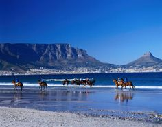 People riding racehorses on the beach at Bloubergstrand, with the city and Table Mountain in the distance