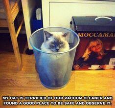The Vacuum Cleaner's Nemesis: The Trash Pail!