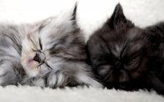 .... bons sonhos ... beijinhos ♥