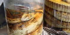 Scientists have figured out how to bring long-dead animal collections into the age of genomic study. Rare Animals, Preserves, Dna, Museum, Canning, Scientists, Jars, Study, Times