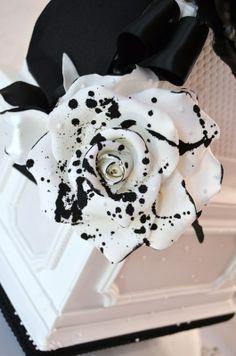 Black and white rose