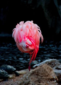 This is wonderful... colors, shape, landscape, almost a real bird with only feathers and no head on!