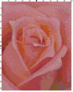 Cross Stitch Pattern Coral Pink Rose Close by theelegantstitchery