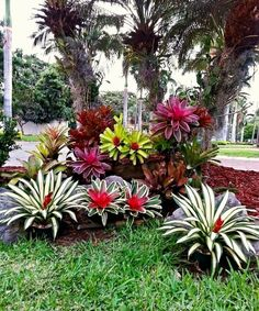 32 flower beds in front of house ideas 20 - Tropical garden design, Front yard garden design, Front yard garden, Florida landscaping, Tropical - Florida Landscaping, Tropical Landscaping, Front Yard Landscaping, Landscaping Ideas, Florida Gardening, Mulch Landscaping, Landscaping Borders, Front Yard Garden Design, Tropical Garden Design