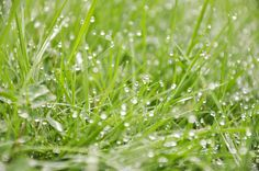 #photography #autumn #fall #grass #green #rain #raindrops #morning #seattle #greengrass #nikon