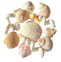 Seashell Wind Chimes Seattle, WA #Kids #Events