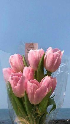*49 아이폰배경화면 심플 : 네이버 블로그 My Flower, Flower Vases, Flower Power, Beautiful Flowers, Sky Aesthetic, Flower Aesthetic, Pretty Backgrounds, Valentines Flowers, Aesthetic Wallpapers