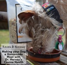 Review & Giveaway: Making your Dog a Homemade Meal with Dr. Harvey's Canine Health #Sponsored Pet Wolf, Dog Food Reviews, Dog Nutrition, Different Dogs, Dogs And Kids, Pet Health, Beautiful Dogs, Dog Design, Dog Lovers