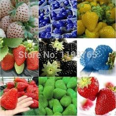 100pcs 2016 New Rare 10 Colors Super Sweet Giant Strawberry Seeds Potted flowers Berry Seeds fruit seed #>=#>=#>=#>=#> Click on the pin to check out discount price, color, size, shipping, etc. Save and like it!