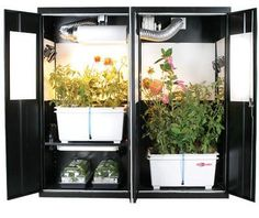 Nothing transforms an indoor gardener from a hobbyist to a professional like a grow tent. Using a grow tent hydroponics system ensures that you have complete control over all aspects of your plants' environment. Happy Growing! growtentdr.com