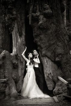 Wedding in Muir Woods, California - Photography by Christian Oth Studio