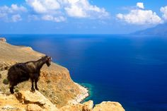 On the way to Balos Beach in Crete you might find few goats...They take care of the path
