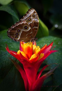 Butterfly on Bright Colored Flower...Red by Justin Grenon on 500px