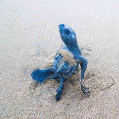 Sea Turtle camp and baby turtle release at #PlayaLasTortugas
