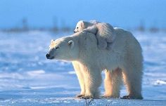 I want a pet polar bear...