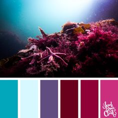 Take a dive under the sea with these beautiful color combinations inspired by ocean life and Living Coral - PANTONE's 2019 Color of the Year. Maroon Color Palette, Colour Pallette, Ocean Color Palette, Paint Color Combos, Paint Combinations, Paint Colors, Bedroom Color Schemes, Colour Schemes, Bedroom Colors