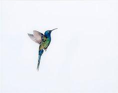 Sanna Kanisto. Hummingbird in flight, Etsy. Veggdekor er et spennende tema. Jeg har sagt det før - men hvite vegger trigger skaperly...