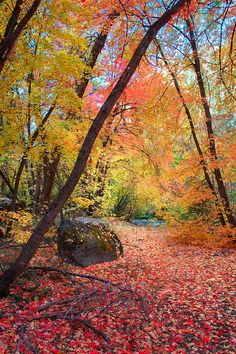 Colorful Autumn Silence by danarees ~  Wasatch Mountains, Utah