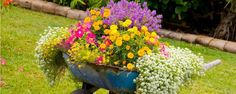 3 pequenas e fáceis ideias para fazer no jardim - Que tal colocar a criatividade em jogo para dar uma cara nova ao seu jardim? Separamos três ideias que podem ser facilmente incluídas no paisagismo de forma fácil e sem muitos custos. Acompanhe e depois nos conte de qual você gostou mais!    Jardim no carrinho de mão Sabe aquele carrinho de ... - http://oleodecitronela.com/ecoblog/2015/12/18/3-pequenas-e-faceis-ideias-para-fazer-no-jardim/