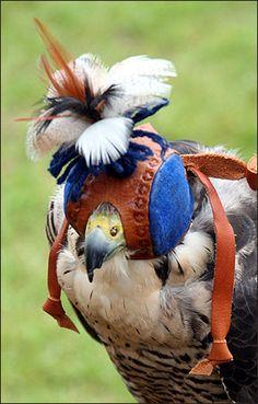 BBC - Berkshire - Nature - In pics: Falconry festival