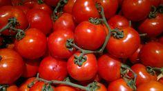 Come coltivare i pomodori, quali sono le differenti varietà e come difenderli da malattie e parassiti