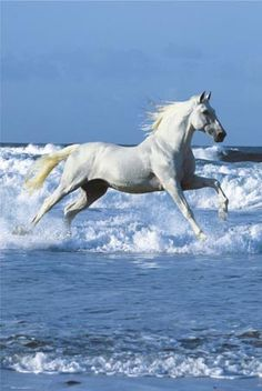 My stallion on a white prince ... no wait ! Was it the other way around? ;o)