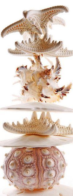 #Seashells #Coquillage