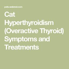 Cat Thyroid Symptoms Meowing
