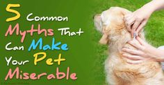 Myths about how to properly care for dogs and cats abound, sometimes fueled by experts in the veterinary industry. http://healthypets.mercola.com/sites/healthypets/archive/2015/09/03/5-pet-care-myths.aspx
